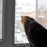 8 pisica la geam