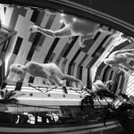 Max Streicher - Lumi Plutitoare 1